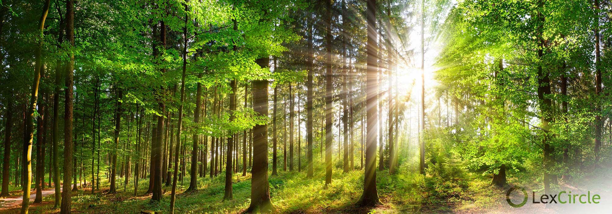 skog og solen som skinner